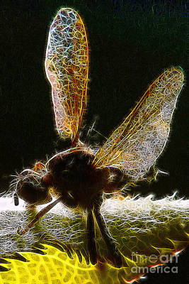 Photograph - Insect Wings At Rest by Wernher Krutein