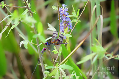 Photograph - Insecticidal by Judy Kay