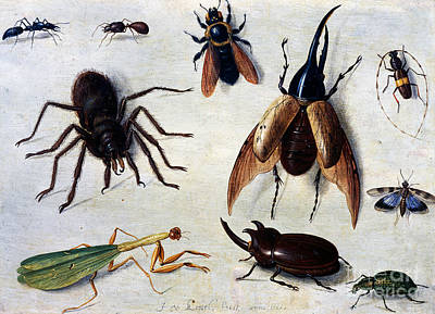 Ant Painting - Insects, 1660 by Jan Van Kessel