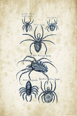 Spider Digital Art - Insects - 1792 - 18 by Aged Pixel