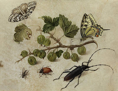 Grasshopper Painting - Insects And Butterfly by Maria Sibylla Merian