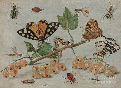 Nature Study Painting - Insects And Fruit, by Jan Van Kessel