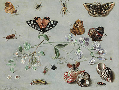 Grasshopper Painting - Insects, Butterflies And Clams by Jan van Kessel