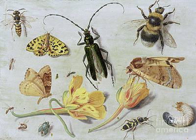 Nature Study Painting - Insects by Jan Van Kessel
