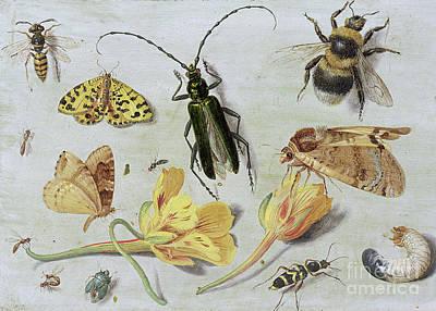 Nasturtiums Painting - Insects by Jan Van Kessel