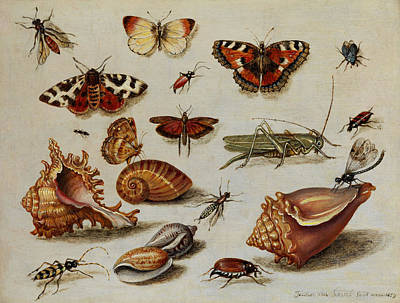 Grasshopper Painting - Insects, Shells And Butterflies by Jan van Kessel
