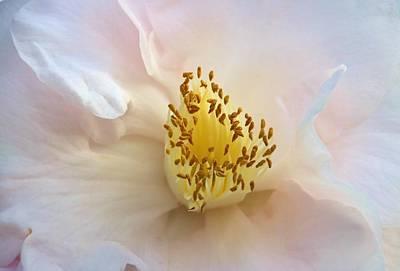 Camellia Photograph - Inside A Camellia by Karen Silvestri