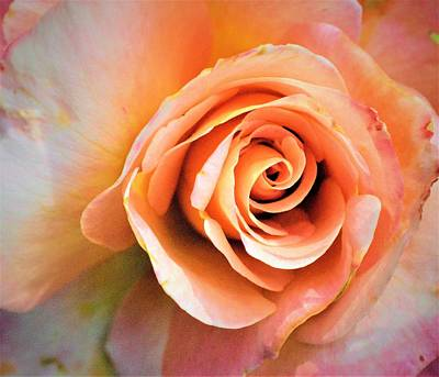 Photograph - Inside A Rose by Charles HALL
