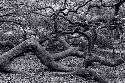Photograph - Inside Angel Oak by Ed Waldrop