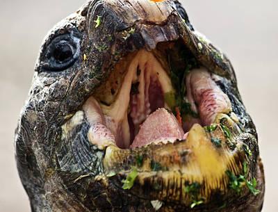 Photograph - Inside Giant Tortoise Mouth by Miroslava Jurcik