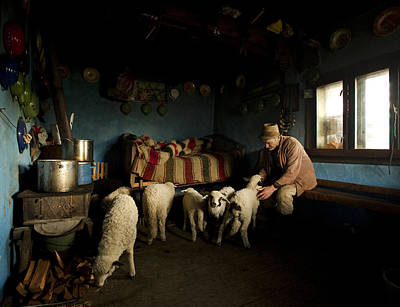 Lamb Photograph - Inside His House by Mihnea Turcu