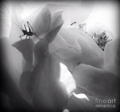 Photograph - Inside Life by Denise Railey