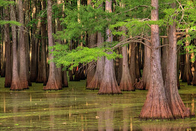 Photograph - Inside The Bayou by Ester Rogers