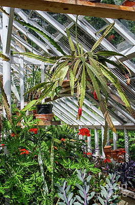 Photograph - Inside The Greenhouse by Patricia Hofmeester