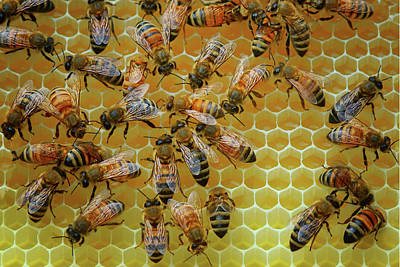 Photograph - Inside The Hive by Nikolyn McDonald