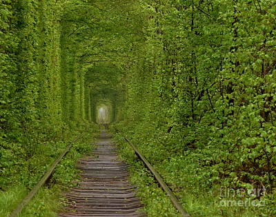 Photograph - Inside The Tunnel Of Love by Steven Liveoak