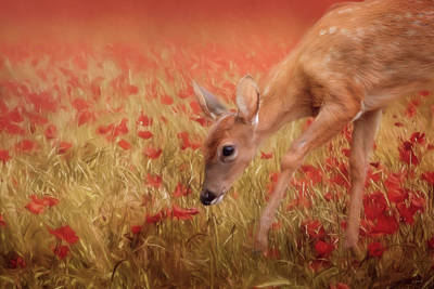 Photograph - Inspecting The Poppies by Jai Johnson