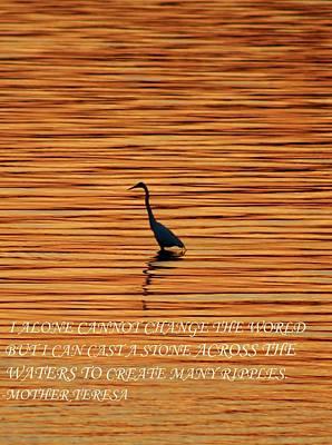 Photograph - Inspirational Heron by Karen Silvestri
