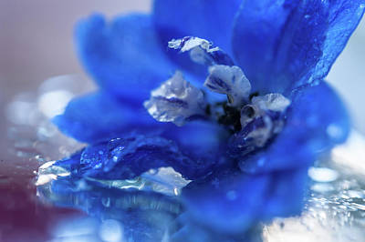 Photograph - Intense Blue by Jenny Rainbow