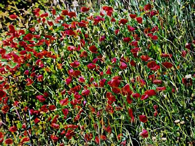 Photograph - Intense Red Poppies by Dorothy Berry-Lound