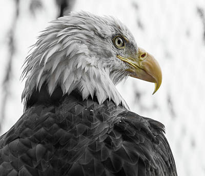 Photograph - Intensity Of The Eagle by Greg Nyquist