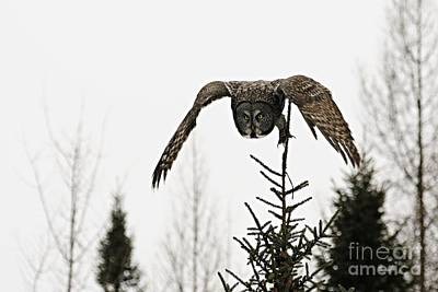 Photograph - Intent On His Prey by Larry Ricker