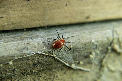 Photograph - Interesting Red Spider 2 by Douglas Barnett