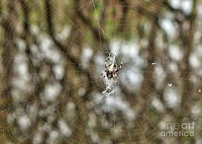 Photograph - Interesting Swamp Spider With Web by Carol Groenen