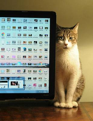 Photograph - Desktop Security by Diana Angstadt