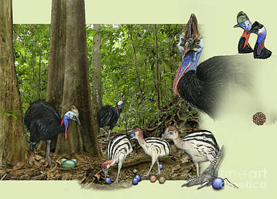 Painting - Zoo Nature Interpretation Panel Cassowaries Blue Quandong by Urft Valley Art