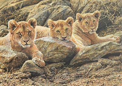 Painting - Interrupted Cat Nap by Alan M Hunt