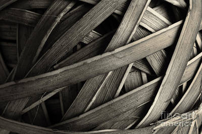 Photograph - Intertwine by Mike Eingle