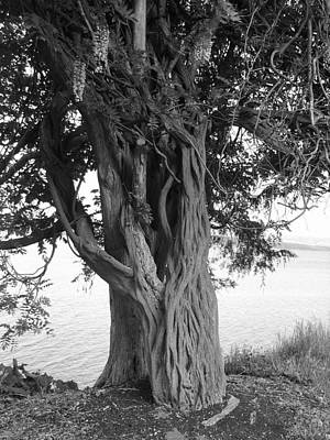 Photograph - Intertwined For Life Black And White by Jennifer Compton