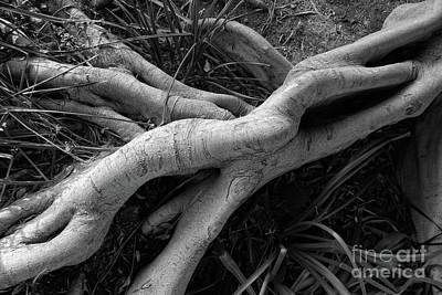 Photograph - Intertwined by Michael Ziegler