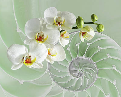 Shells Photograph - Intimate Fusion In Cool Green by Gill Billington