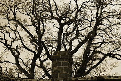 Photograph - Intimidating Tree Above Fort Wall In Sepia by Colleen Cornelius