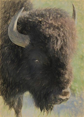 Bison Mixed Media - Intimidation by Dan Sproul