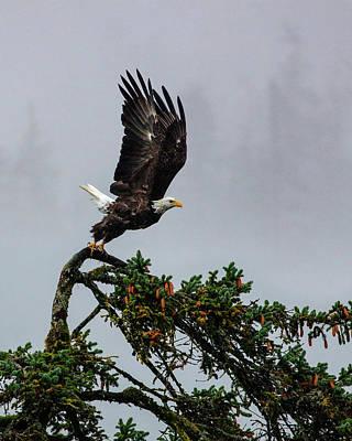 Alaska Photograph - Into Flight by Dan Holmes