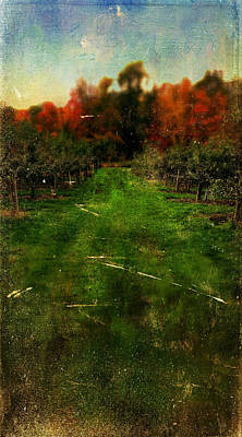Photograph - Into The Apple Orchard by Christina VanGinkel