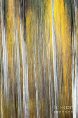 Anne Geddes Large Format Polaroids - Into the Aspens by Todd Bielby