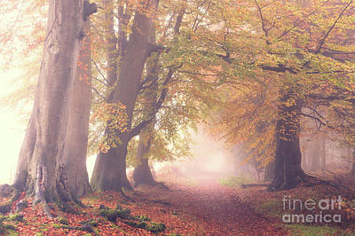 Into The Autumn Art Print