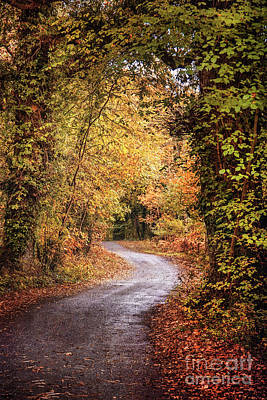 Photograph - Into The Autumnsphere by Evelina Kremsdorf