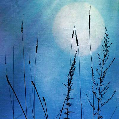 Mixed Media - Into The Blue by Diane Paquin