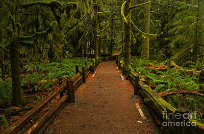 Into The Canadian Rainforest Art Print by Adam Jewell