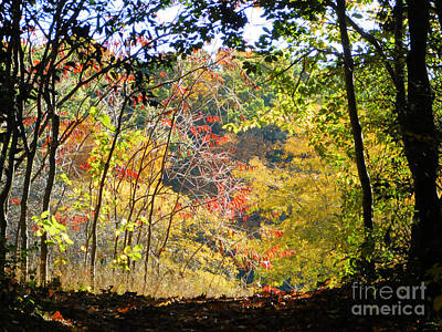 Photograph - Into The Clearing by Vickie Johnson