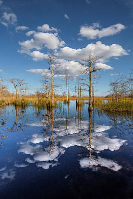 Photograph - Into The Everglades Blue by Debra and Dave Vanderlaan