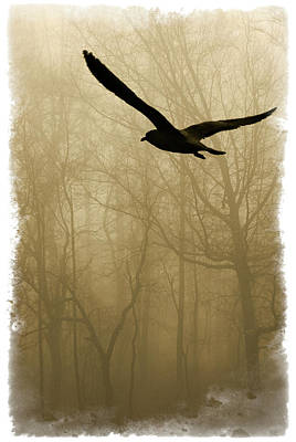 Art Print featuring the photograph Into The Fog by Harry Spitz