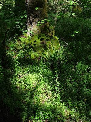 Photograph - Into The Forest by I'ina Van Lawick