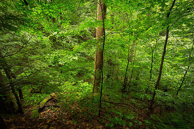 Virginia Photograph - Into The Green by Shane Holsclaw