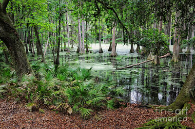 Cypress Swamp Photograph - Into The Green Swamp by Carol Groenen